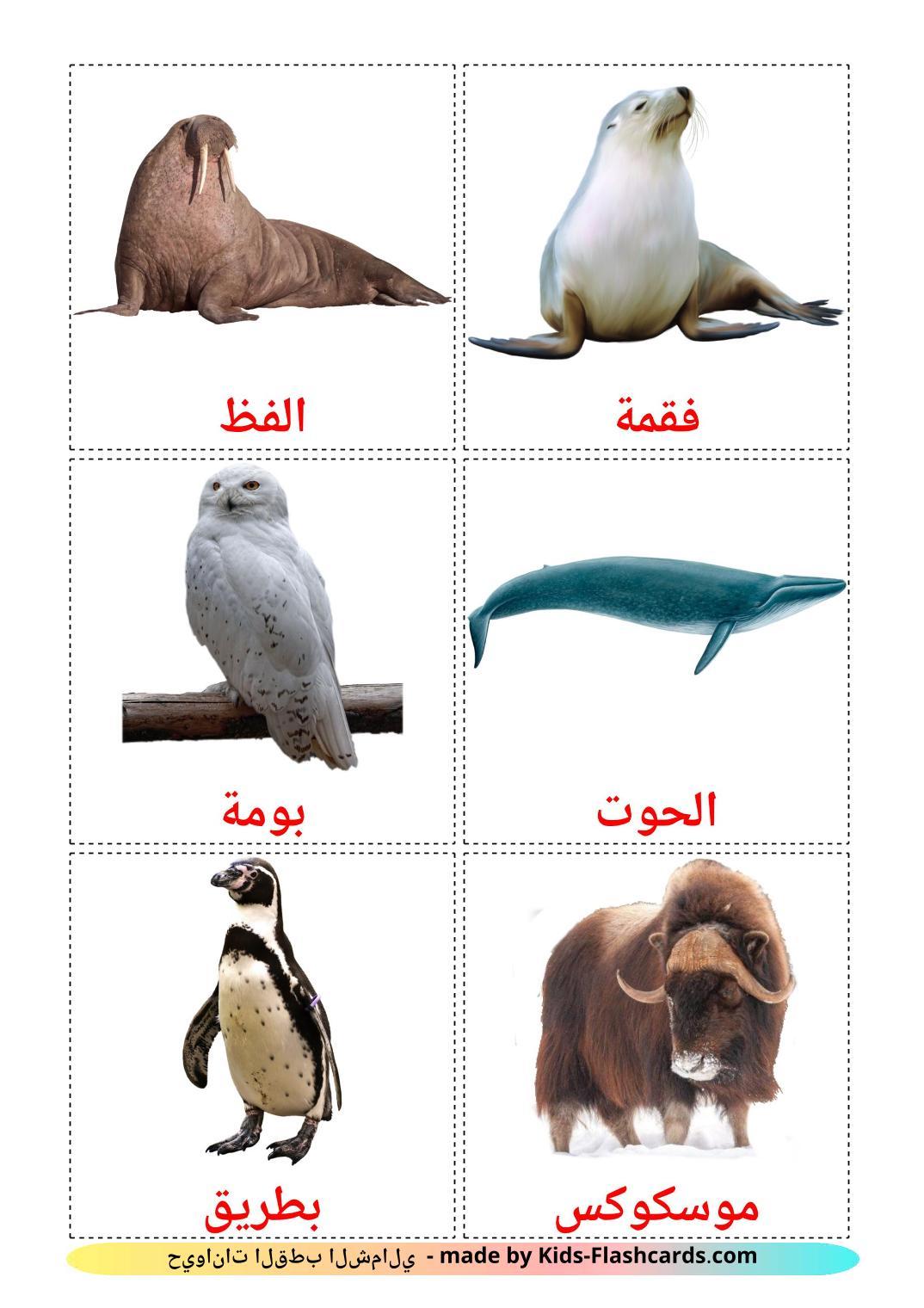 Arctic animals - 14 Free Printable arabic Flashcards