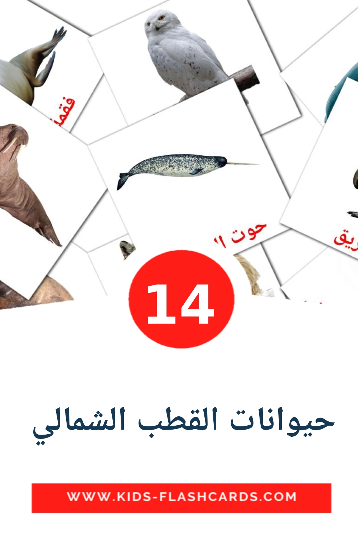 14 حيوانات القطب الشمالي  Picture Cards for Kindergarden in arabic