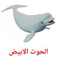 الحوت الابيض picture flashcards