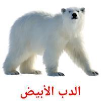 الدب الأبيض picture flashcards