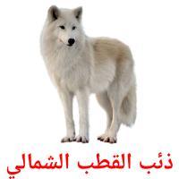 ذئب القطب الشمالي picture flashcards