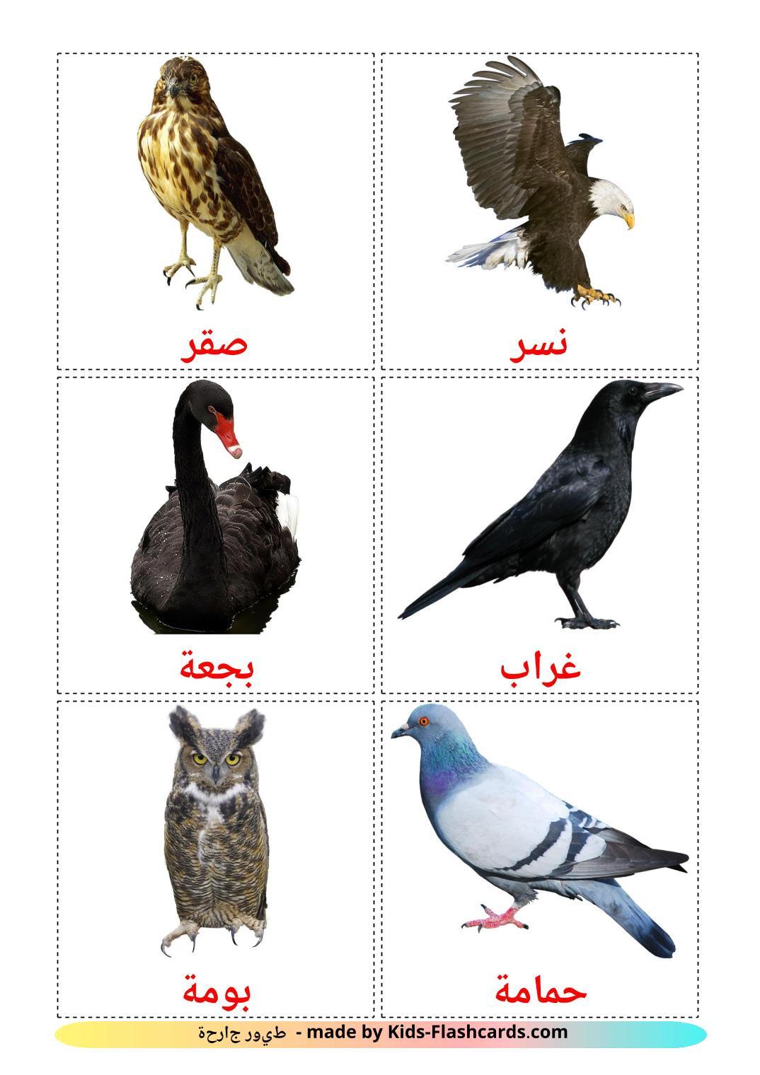 Wild birds - 17 Free Printable arabic Flashcards