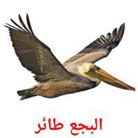 البجع طائر picture flashcards