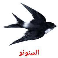 السنونو picture flashcards