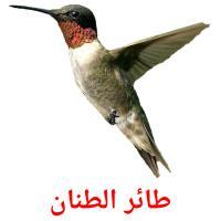 طائر الطنان picture flashcards
