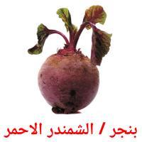 بنجر / الشمندر الاحمر picture flashcards