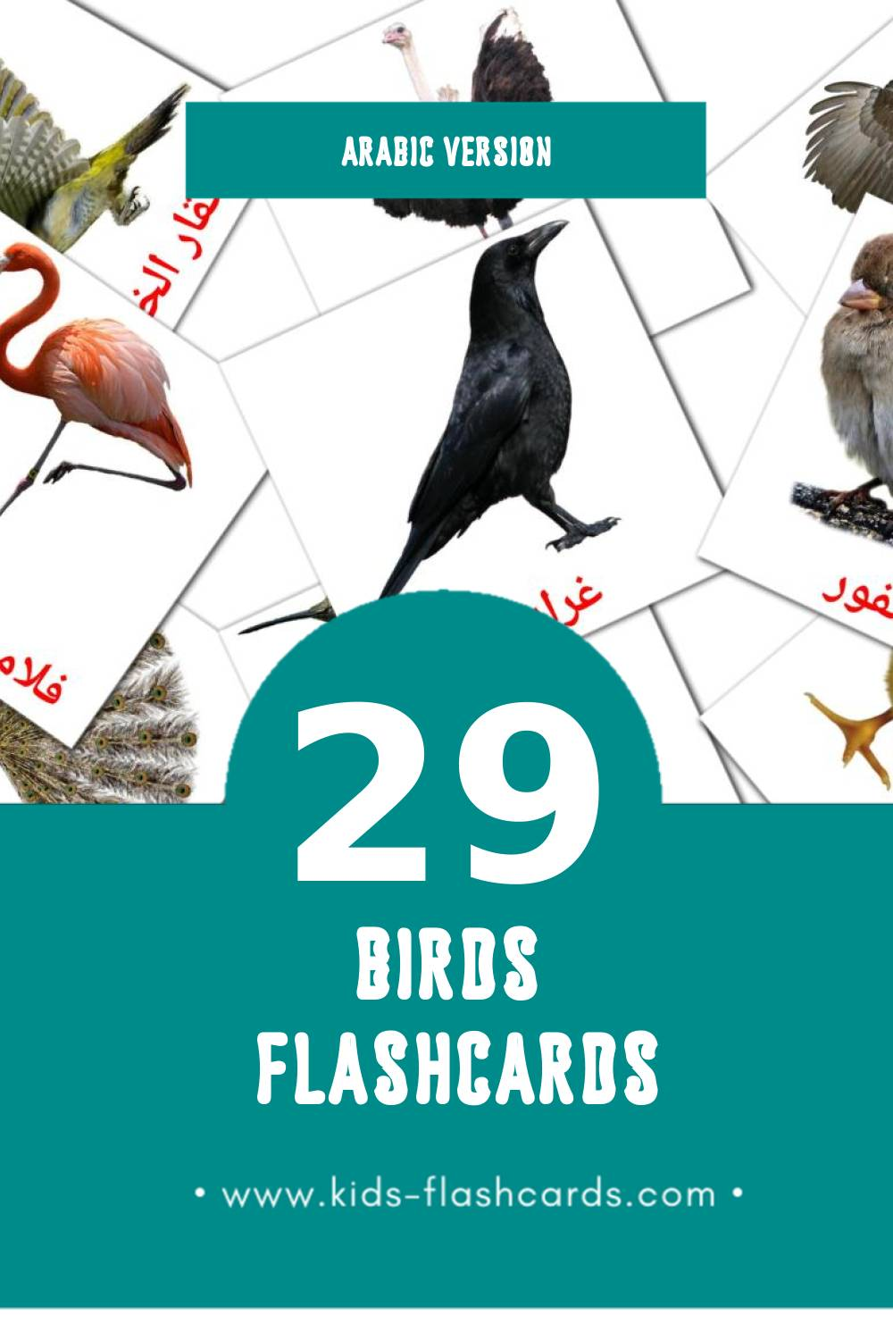 Visual رويط Flashcards for Toddlers (28 cards in Arabic)