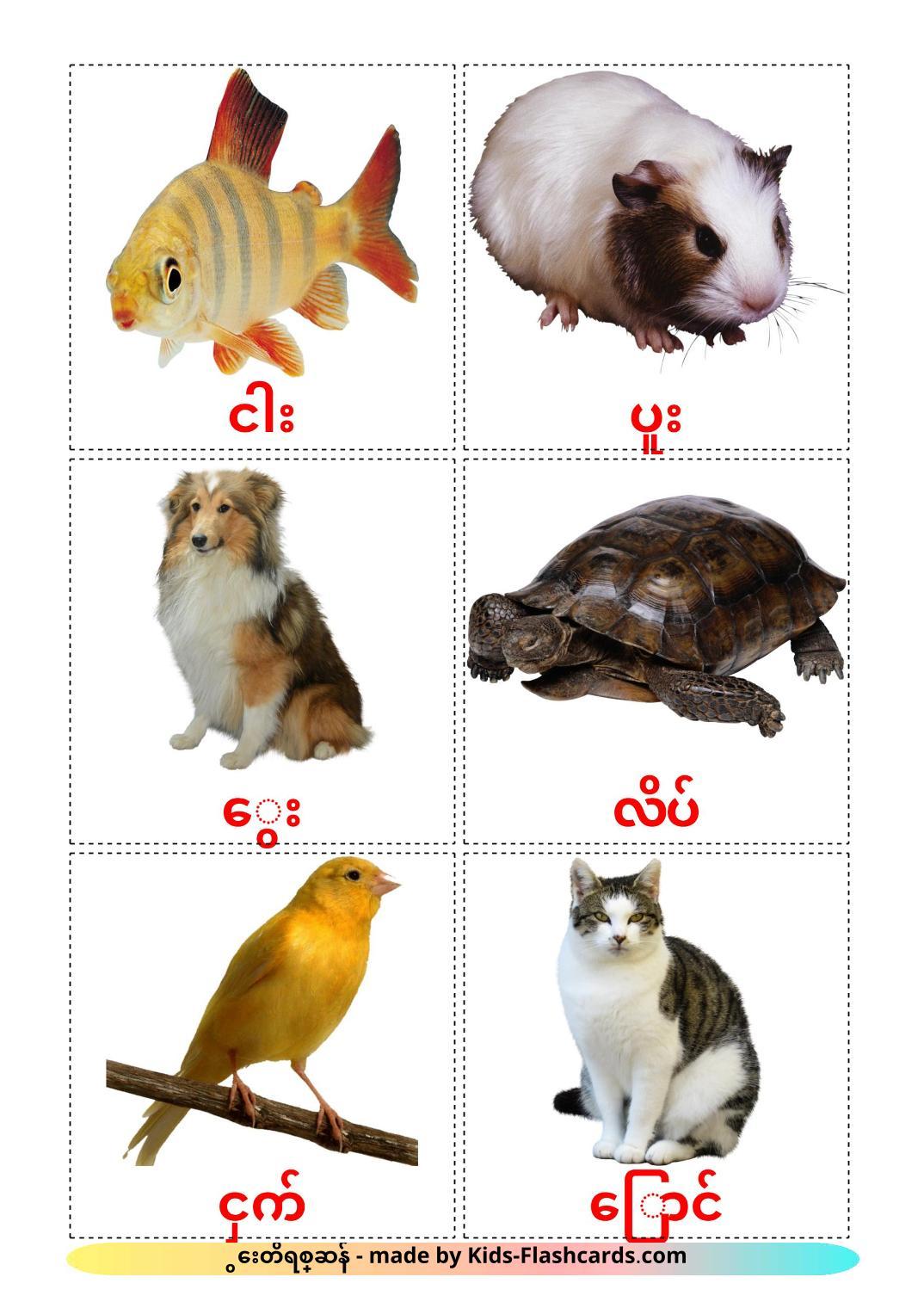 Domestic animals - 10 Free Printable azerbaijani(cyrillic) Flashcards