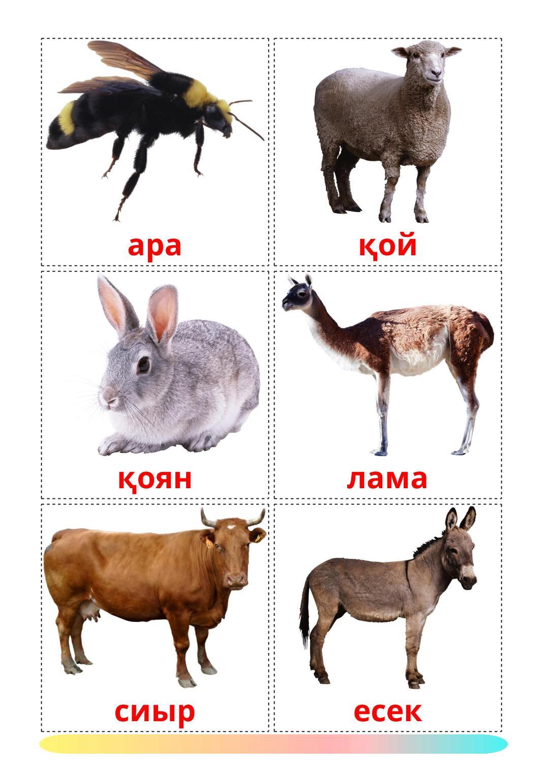 Farm animals - 15 Free Printable azerbaijani(cyrillic) Flashcards