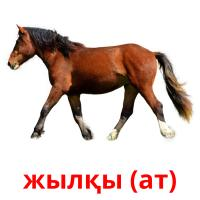 жылқы (ат) picture flashcards