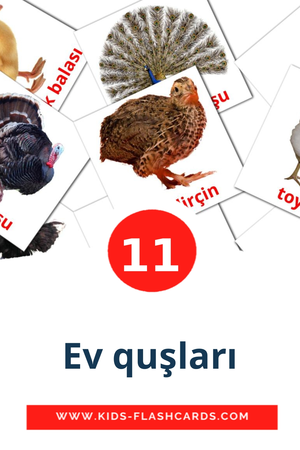11 Ev quşları Picture Cards for Kindergarden in azerbaijani(cyrillic)