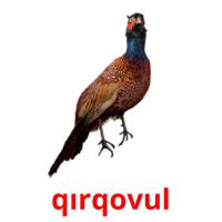 qırqovul picture flashcards
