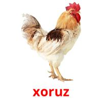 xoruz picture flashcards