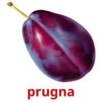 prugna picture flashcards