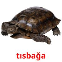 tısbağa picture flashcards