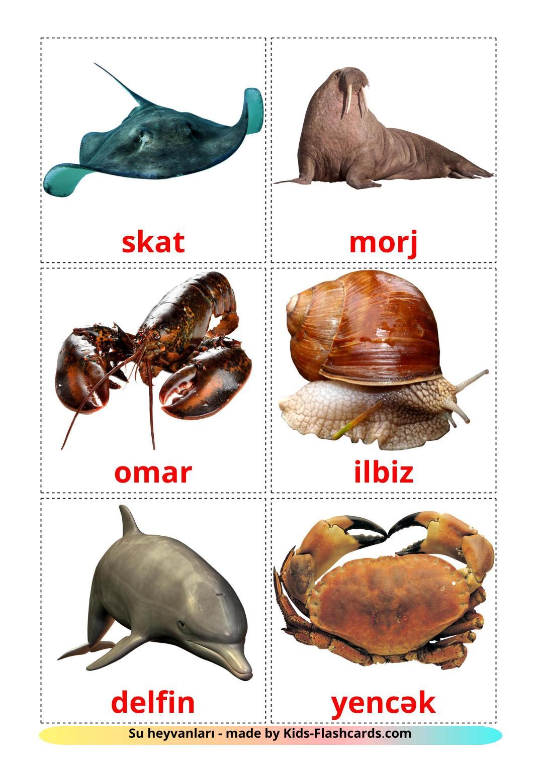 Sea animals - 29 Free Printable azerbaijani Flashcards
