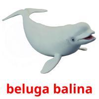 beluga balina picture flashcards