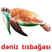 dəniz  tısbağası picture flashcards