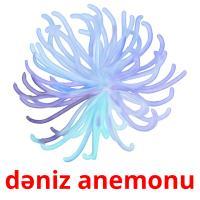 dəniz anemonu picture flashcards