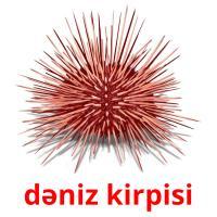 dəniz kirpisi picture flashcards