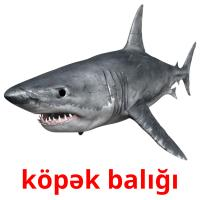 köpək balığı picture flashcards