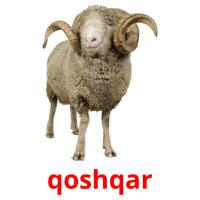 qoshqar picture flashcards