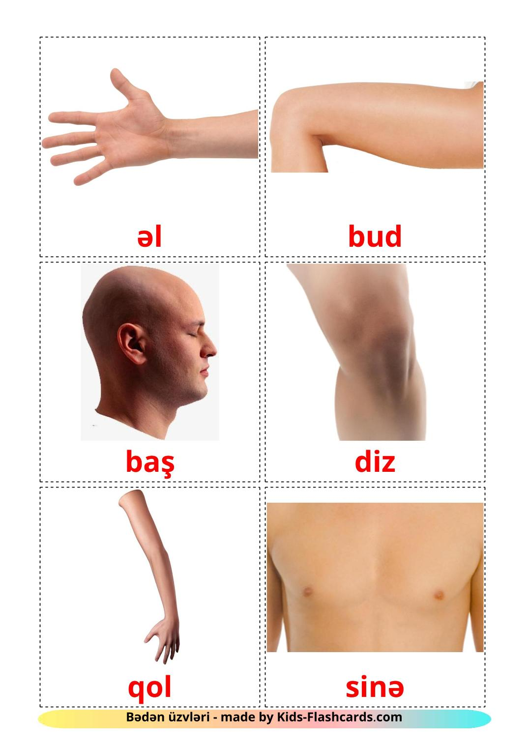 Body Parts - 26 Free Printable azerbaijani Flashcards