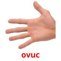ovuc card for translate