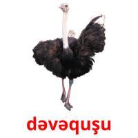 dəvəquşu picture flashcards