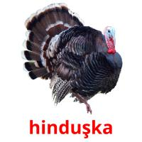 hinduşka picture flashcards