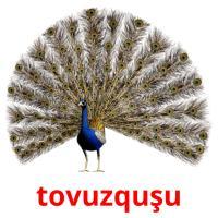 tovuzquşu picture flashcards