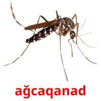 ağcaqanad picture flashcards