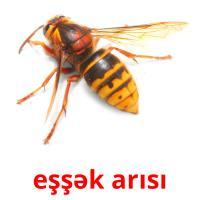 eşşək arısı picture flashcards