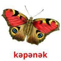 kəpənək picture flashcards