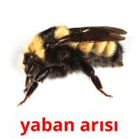yaban arısı picture flashcards