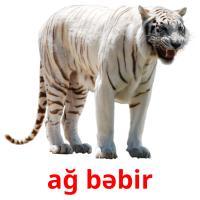 ağ bəbir picture flashcards