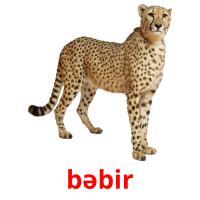 bəbir picture flashcards