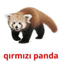 qırmızı panda picture flashcards
