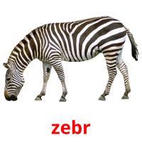 zebr picture flashcards
