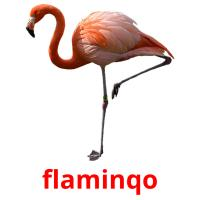 flaminqo picture flashcards