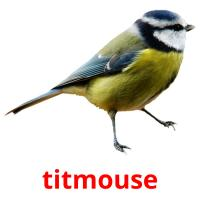 titmouse picture flashcards