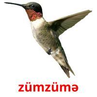 zümzümə picture flashcards