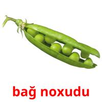 bağ noxudu picture flashcards