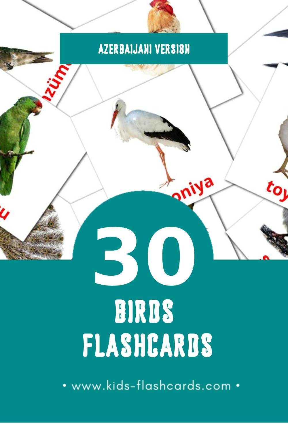 Visual Quşlar Flashcards for Toddlers (30 cards in Azerbaijani)