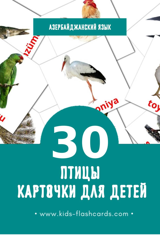"""""""Quşlar"""" - Визуальный Азербайджанском Словарь для Малышей (30 картинок)"""