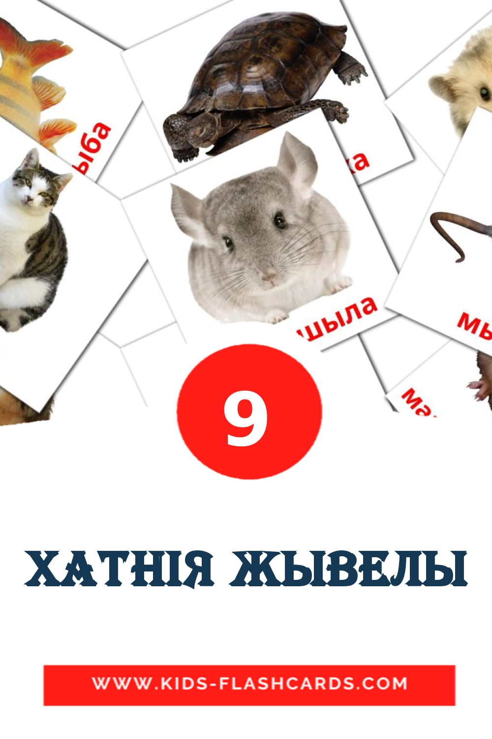 9 Xатнiя жывелы Picture Cards for Kindergarden in belarusian
