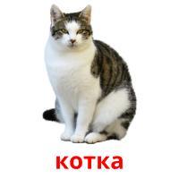 котка picture flashcards