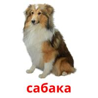 сабака picture flashcards