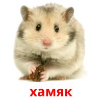 хамяк picture flashcards