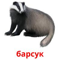барсук picture flashcards